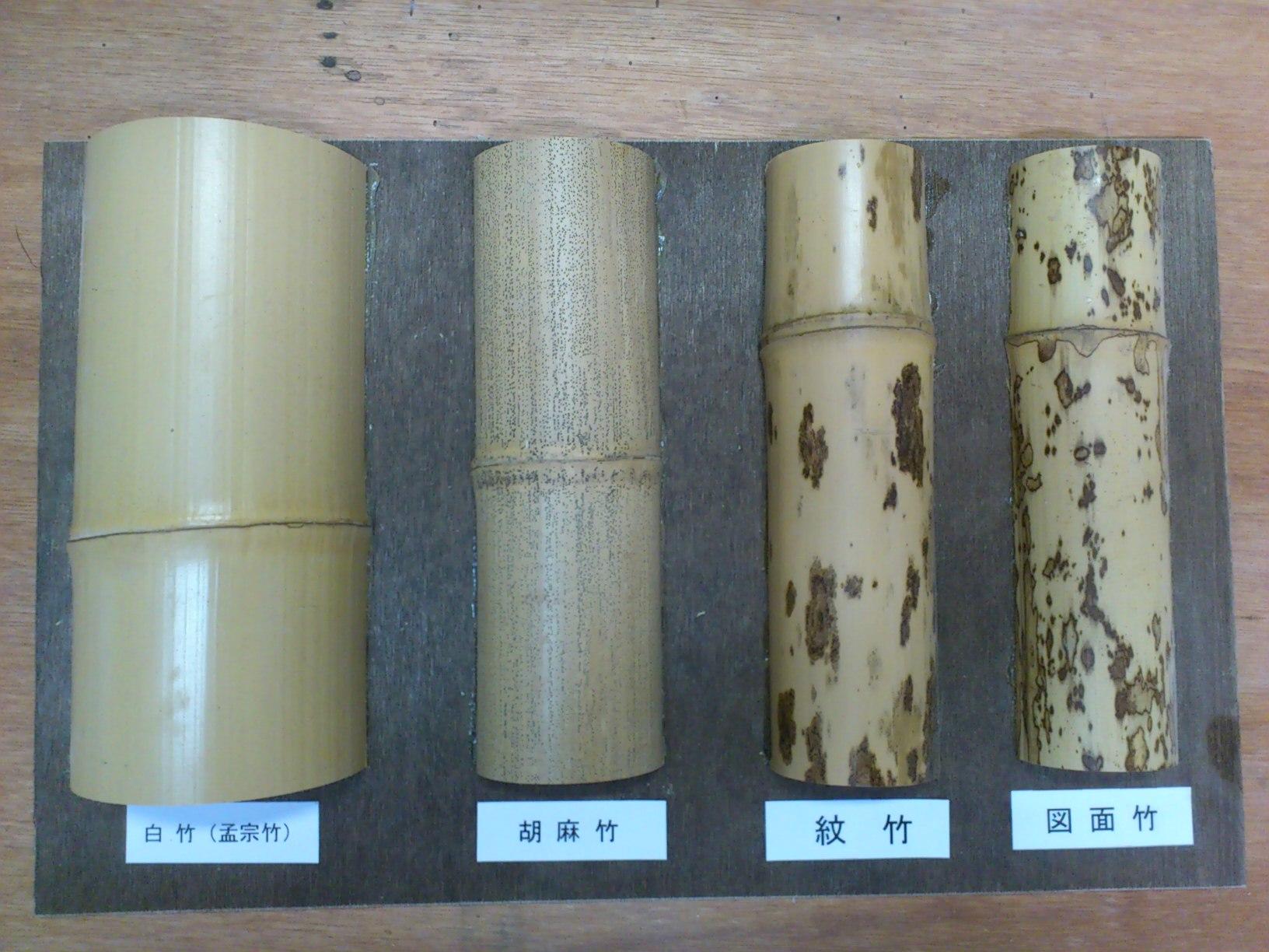 竹の画像 p1_38