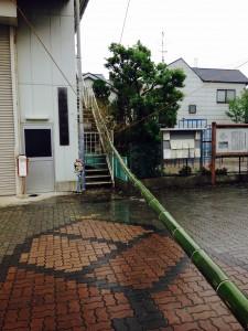 ディスプレイの竹