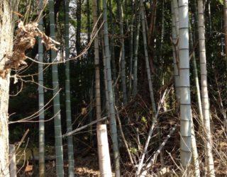 京都の竹林・竹藪の伐採・整備、お任せください。